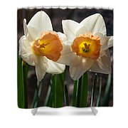In Conversation - A Couple Of Daffodils Huddled Together Shower Curtain