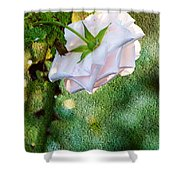 In Early Morning Light - White Rose Shower Curtain