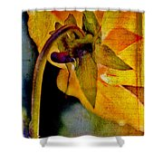 In Grandmother's Memory Book Shower Curtain