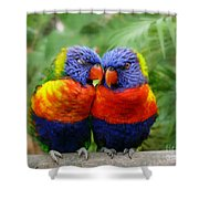 In Love Lorikeets Shower Curtain
