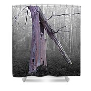 In Memory Of A Tree Shower Curtain