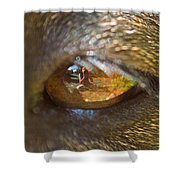 In My Dog's Eyes I'm Everything Shower Curtain