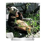In Need Of More Sleep. Er Shun Giant Panda Series. Toronto Zoo Shower Curtain
