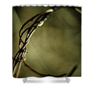 In Shadows And Light Shower Curtain by Rebecca Sherman