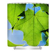 In The Cooling Shade - Featured 3 Shower Curtain