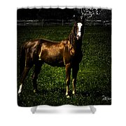 In The Corral 1 - Featured In Comfortable Art And Wildlife Groups Shower Curtain