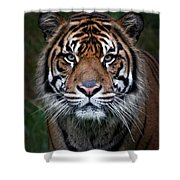 Tiger In Your Face Shower Curtain