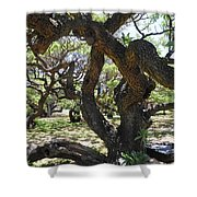In The Depth Of Enchanting Forest IIi Shower Curtain