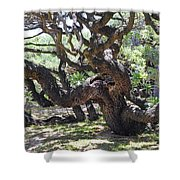 In The Depth Of Enchanting Forest Vi Shower Curtain