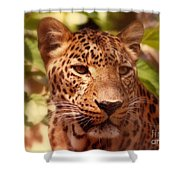 New Orleans In The Eyes Of The Leopard Shower Curtain