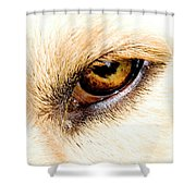 In The Eyes.... Shower Curtain