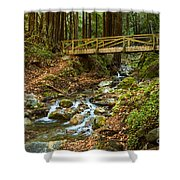 In The Forest - Limekiln State Park In California Shower Curtain