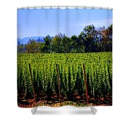 In The Grow 16080 Shower Curtain