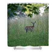 White-tailed Deer In Meadow  Shower Curtain