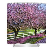 In The Pink Shower Curtain by Debra and Dave Vanderlaan