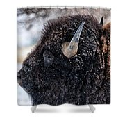In The Presence Of  Bison - 6 Shower Curtain