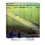 In The Rice Fields Shower Curtain