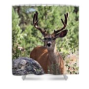 In The Shade Shower Curtain