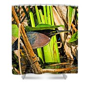 In The Shade Little Green Heron Shower Curtain