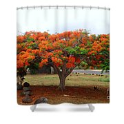 In The Shade Of The Poincianas Shower Curtain