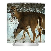 In The Snow At Sunset Shower Curtain