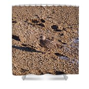 In The Stone Surf Gravel Cape May Nj Shower Curtain