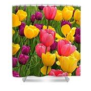 In The Tulip Garden Shower Curtain