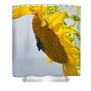 In The Wind - Sunflower Shower Curtain