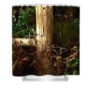 In The Woods By The River Shower Curtain