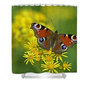 Inachis Io Butterfly On The Yellow Flowers Shower Curtain