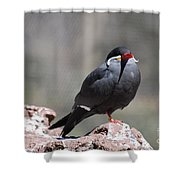 Inca Tern Shower Curtain