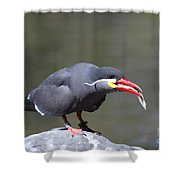 Inca Tern With A Fish Shower Curtain
