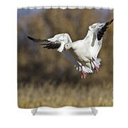 Incoming Snow Goose Shower Curtain