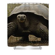 Indefatigable Island Tortoise Galapagos Shower Curtain