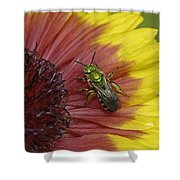Indian Blanket And Bee Shower Curtain