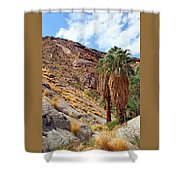Indian Canyons View With Two Palms Shower Curtain