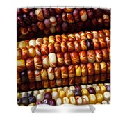 Indian Corn Harvest Time Shower Curtain