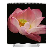 Indian Lotus On Black --- Sacred Light Shower Curtain
