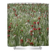 Indian Paintbrush And Foxtail Barley Shower Curtain