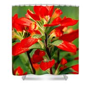 Indian Paintbrush I I Shower Curtain