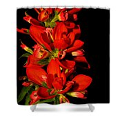 Indian Paintbrushs For Mom Shower Curtain