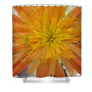 Indian Painter Shower Curtain