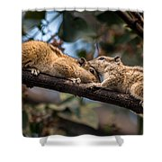Indian Palm Squirrel Shower Curtain