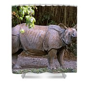 Indian Rhinoceros Shower Curtain
