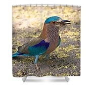 Indian Roller Shower Curtain