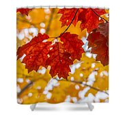 Indian Summer Trees Shower Curtain