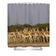 Indian Wild Ass Herd Gujarat India Shower Curtain