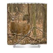 Indiana Buck  Shower Curtain