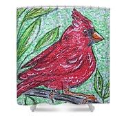 Indiana Cardinal Redbird Shower Curtain