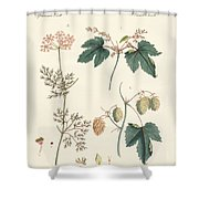 Indigenous Spice Plants Shower Curtain